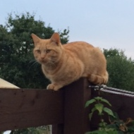 Bob the allotment cat